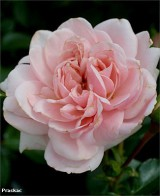 Foto: Home & Garden®