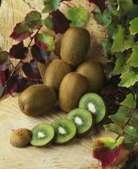 Foto: Großfruchtige Kiwi