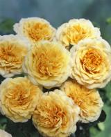 Foto: Crown Princess Margareta®