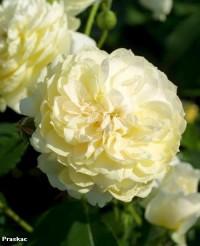 Foto: Yellow Romantica®