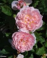 Foto: Anne Boleyn®